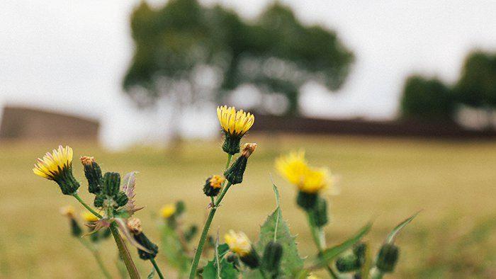 けんちく目線で見てみよう!「風の丘葬斎場」