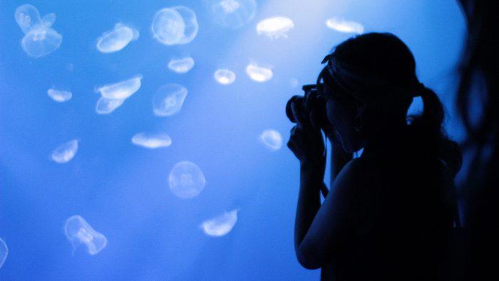 【カメラ実験隊Vol.2】知りたい!水族館撮影のコツ。