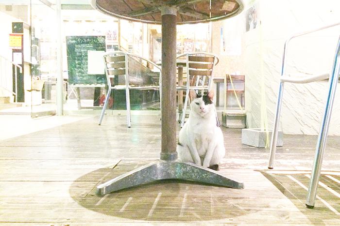 旅で撮りたい!ほっこり猫写真 沖縄