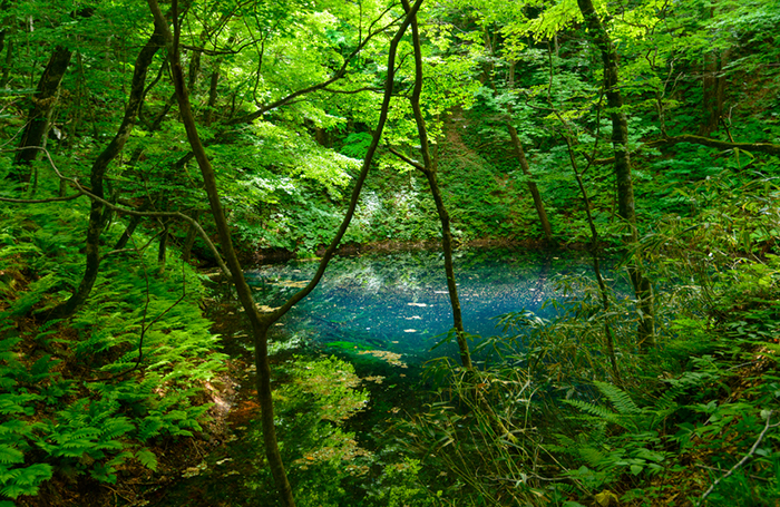 Blue Pond in Shirakami-Sanchi in Aomori, Japan
