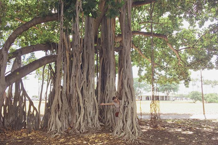 ハワイ hawaii ワイキキ アラモアナ バニヤンツリー
