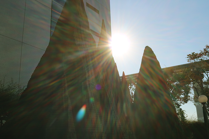 逆光で太陽と作品を撮る