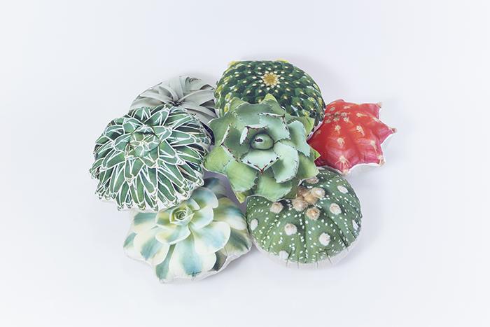 たにくっしょん®は現在、アガベ吉祥冠、金洋丸、チランジア、アガベ笹の雪、エケベリア、ピンク牡丹、兜丸、アガベ吉祥天の、全8品種のラインナップ。