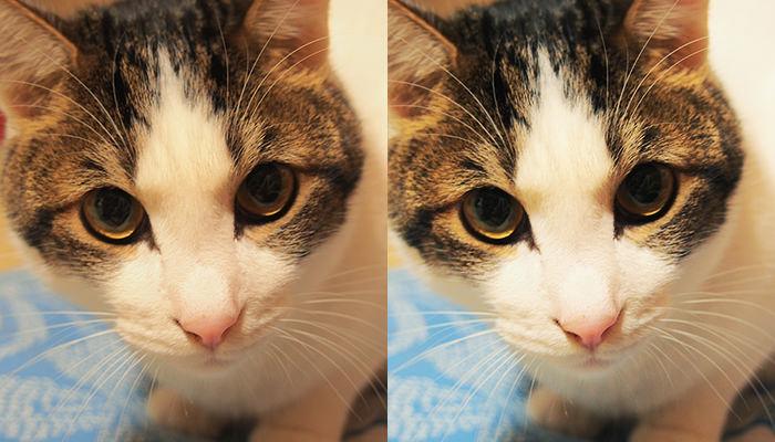 猫写真のレタッチ