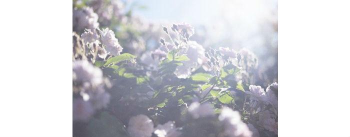 蜷川実花 うつくしい日々