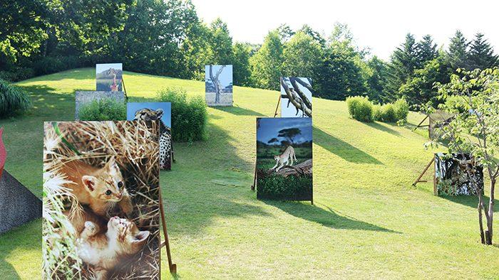 札幌で開催中!岩合光昭写真展「THE CATS ねこ科 ねこは野生動物だ。」に行ってきました。