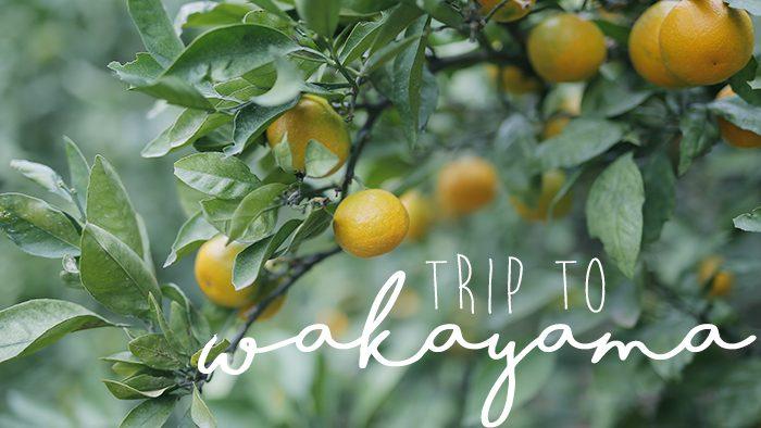 コーヒーにジェラートに、グラノーラ。知られざる和歌山を再発見する旅へ。