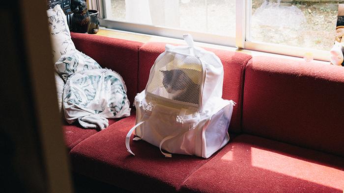 BAG CAT BAG