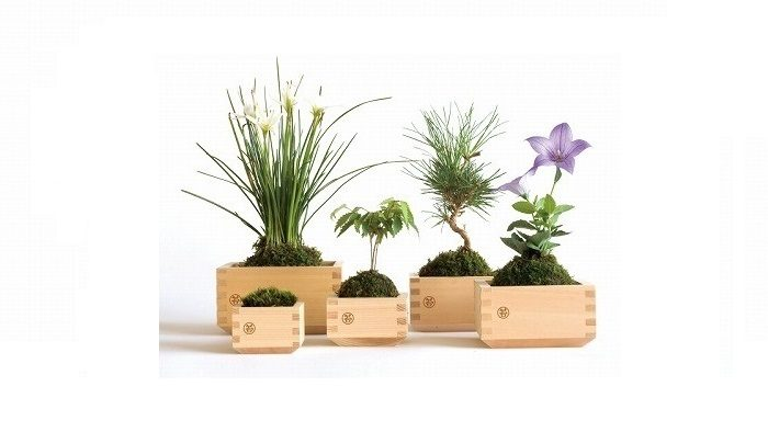 木枡×苔の黄金コンビ!日本の情緒を感じるグリーンインテリア「MASU MOSS(マスモス)」