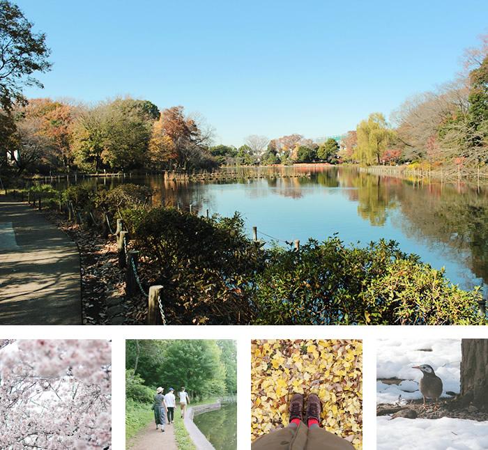 場所は、西荻窪の善福寺公園の近く
