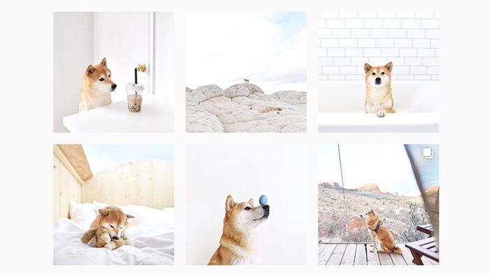 ひと際おしゃれな柴犬のInstagramアカウント「hellohoku」