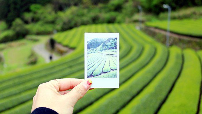 """お茶を五感で味わう!産地ならではの""""体験""""が出来る街、佐賀・嬉野市。"""