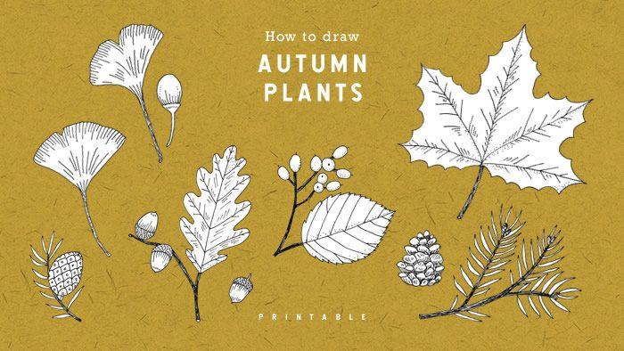 なぞって描けるイラストレッスン「秋の植物の描き方」FREE PRINTABLE