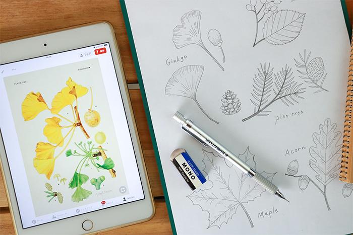 普段、わたしが植物のイラストを描くときは、植物の形の観察からはじめます。