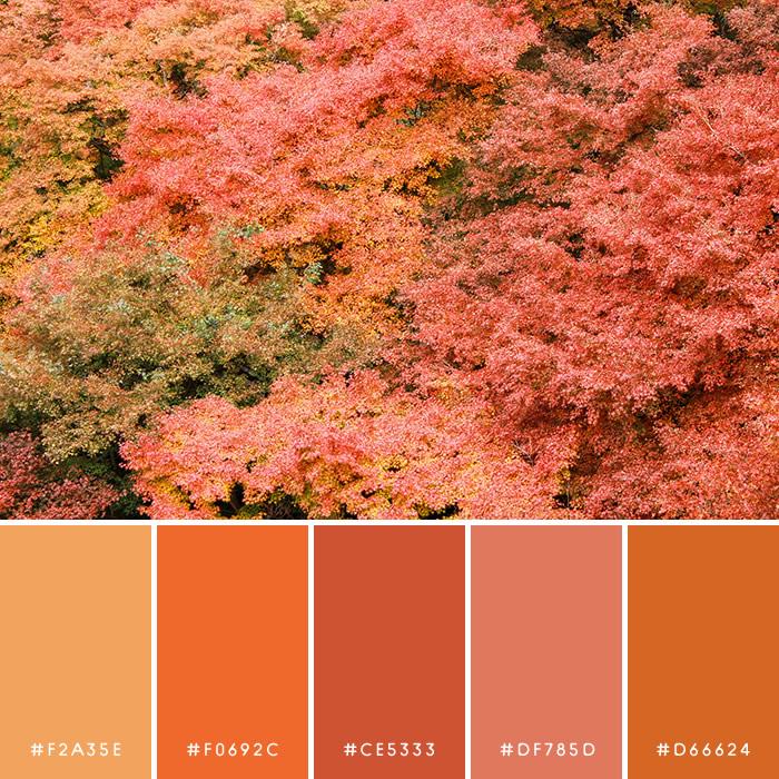 haconiwa Autumn Color 05