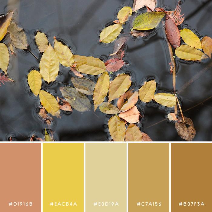haconiwa Autumn Color 06