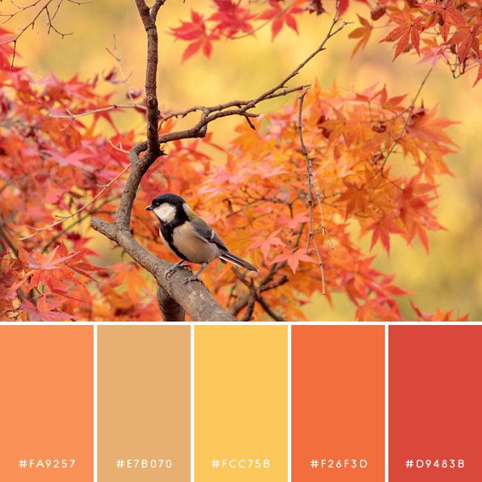 haconiwa Autumn Color 08