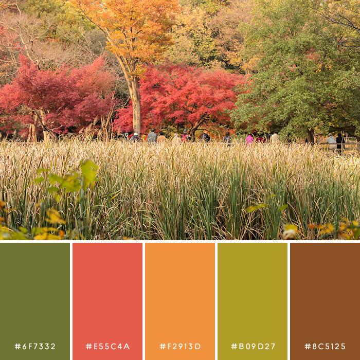 haconiwa Autumn Color 09