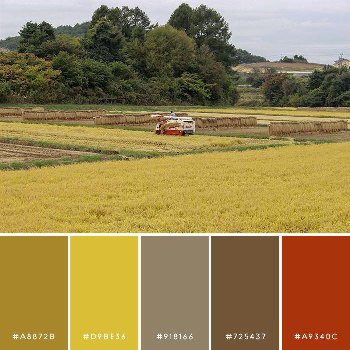 haconiwa Autumn Color 10
