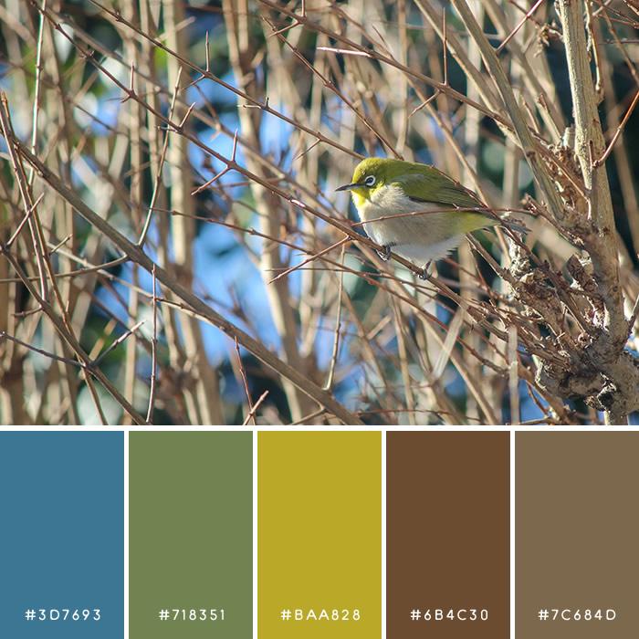haconiwa Winter Color 03