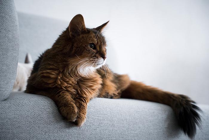 KARIMOKU CAT