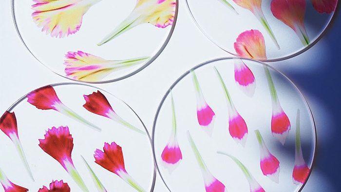 母の日の贈り物にぴったり。花びらが美しいtoumeiさんの「カーネーションcoaster」