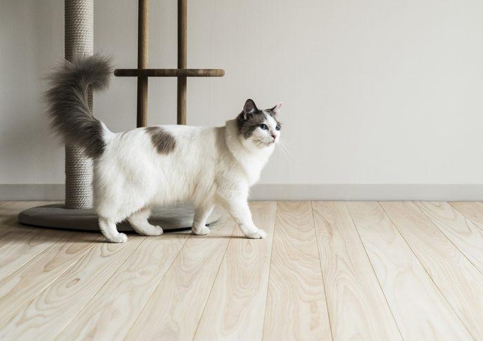 猫も飼い主も住みやすく。キャットファーストのフローリング「NEKOFLOOR」がデビュー。