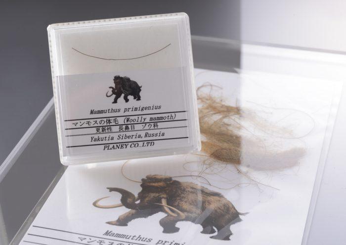 鉱物や天然石が一同に揃う大規模なミネラルショー!「第28回東京ミネラルショー2019」ペア招待券セットをプレゼント