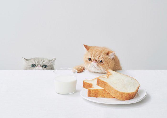 """""""ねこの形""""と美味しさに癒される!たっぷりミルクの本格派食パン専門店「ねこねこ食パン」"""