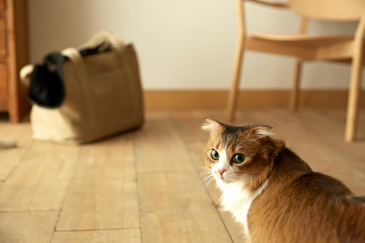 Neko Carry Bag