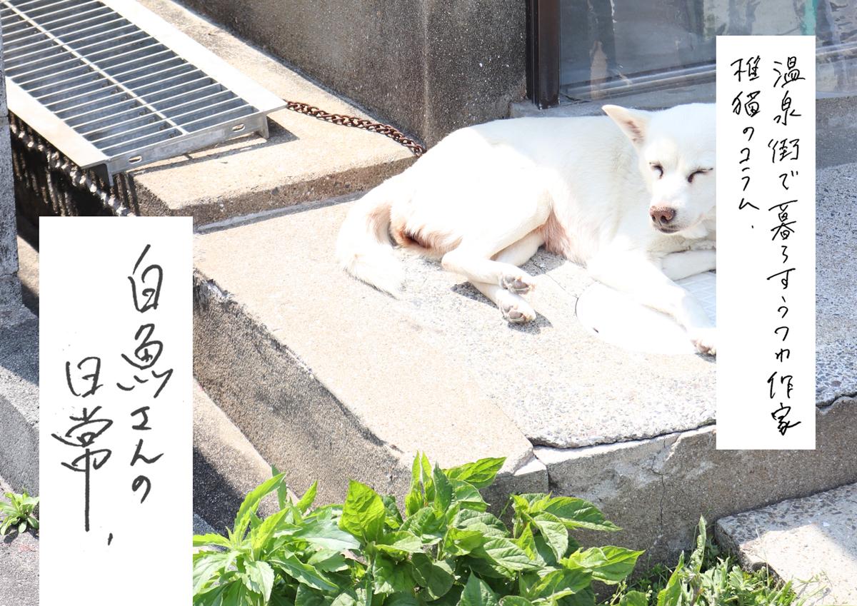 温泉街で暮らすうつわ作家 椎猫のコラム「白魚さんの日常」vol.2