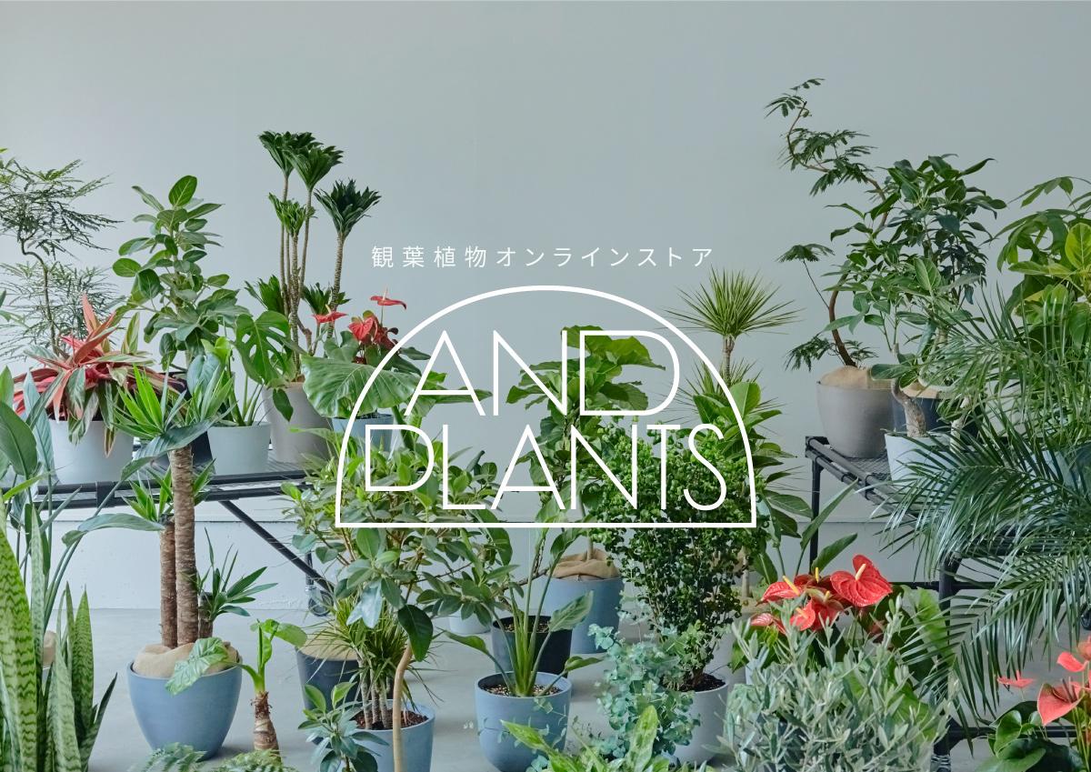 初心者でも安心!ライフスタイルにぴったりの観葉植物を提案してくれる、オンラインストア「AND PLANTS」が誕生。